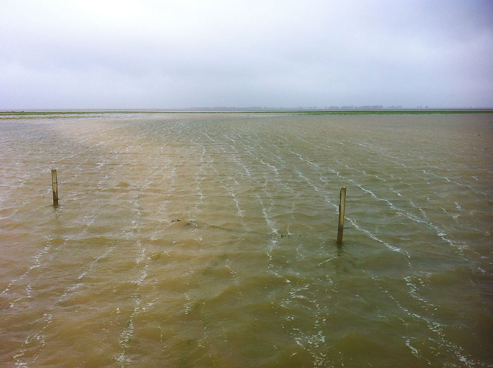 High level of water in the marshes