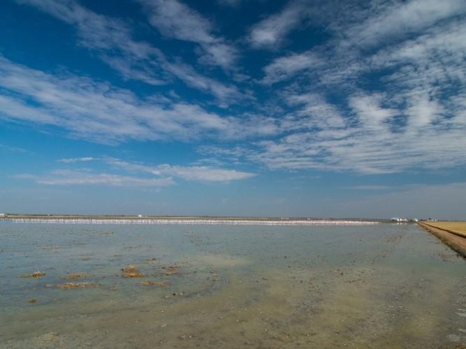 Arrozales inundados Doñana