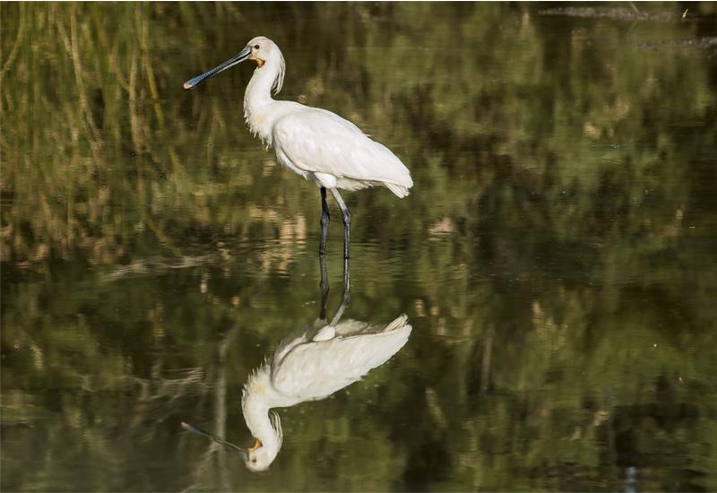 Cádiz wetlands