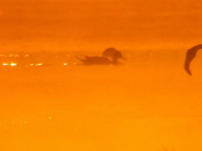 Flamencos en el amanecer en las marismas de Doñana. Marshes Flamingo Sunrise