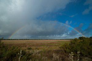 Arcoiris sobre la marisma seca y el bosque