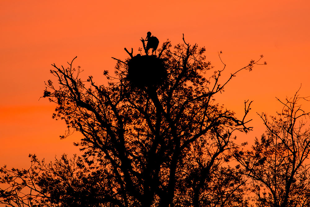 stork nest at sunset