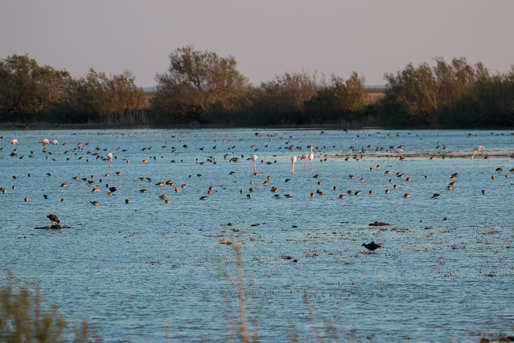 Waders and flamingos