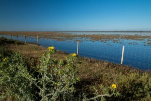 Hinojos Marshes