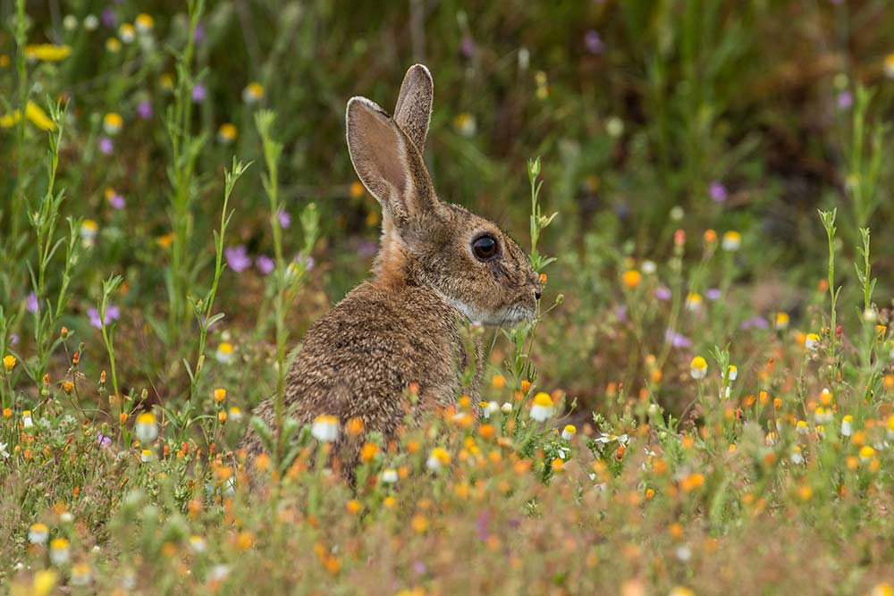 rabbit among flowers