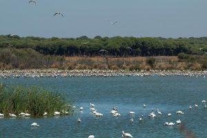 Storks and spoonbills at Dehesa de Abajo