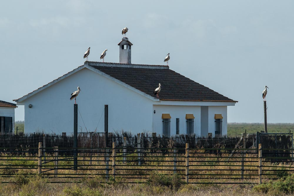 House and white storks