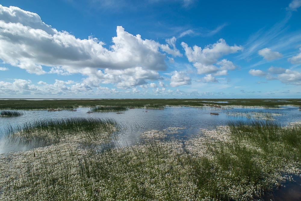 Flooded marshes with clouds