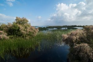 Flooded marshes and tamarisks