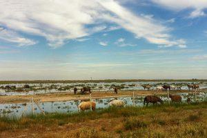 Marsh mares