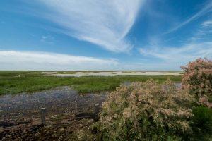 Marisma inundada bajo un cielo azul