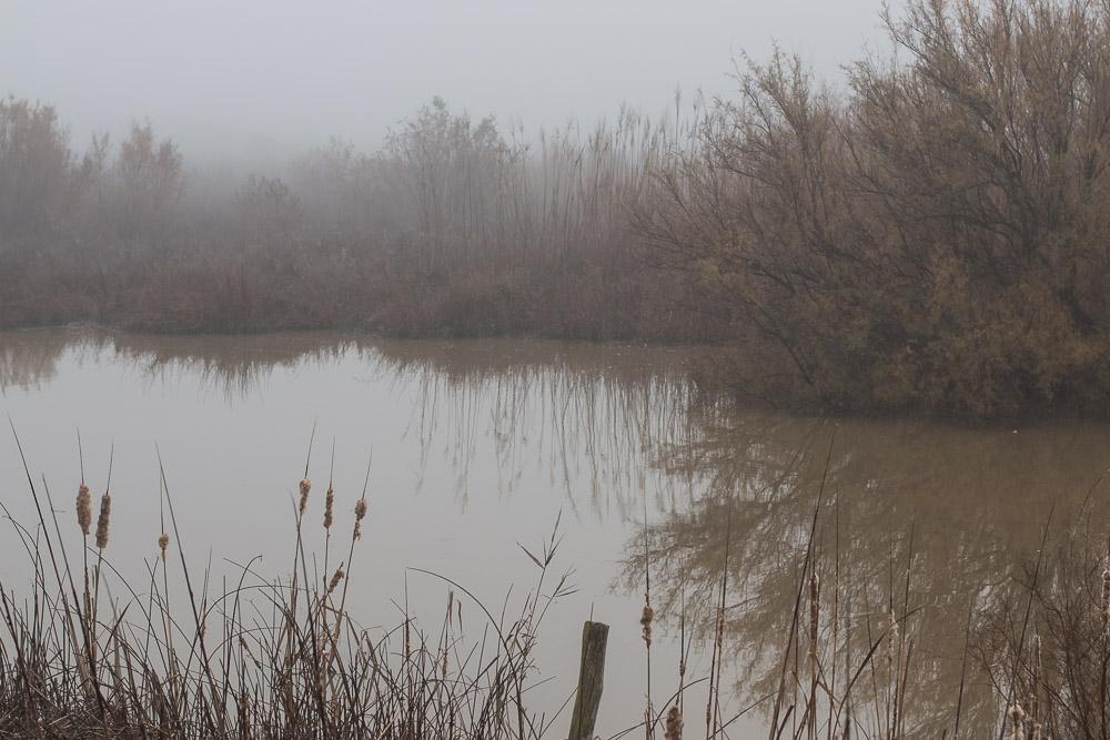Caño Guadiamar en la niebla