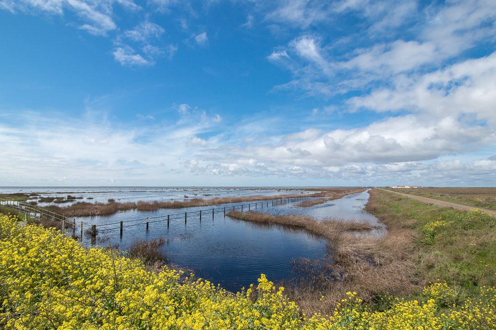 Flooded marshes with yellow flowers in the foreground