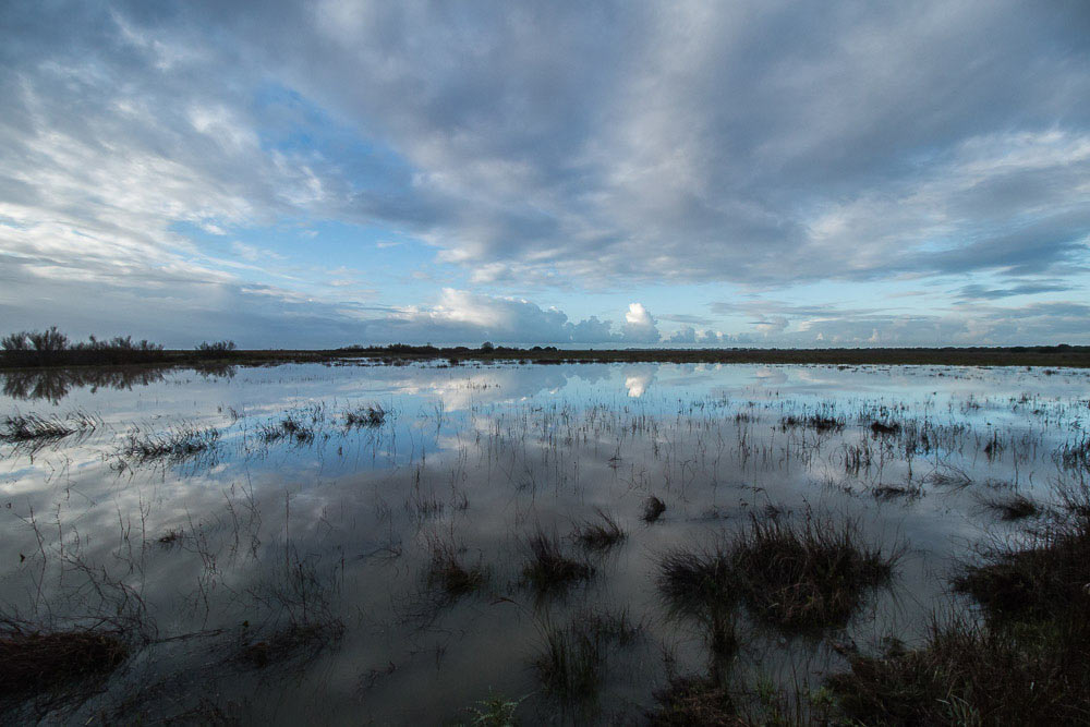 Reflections in the flooded marshes