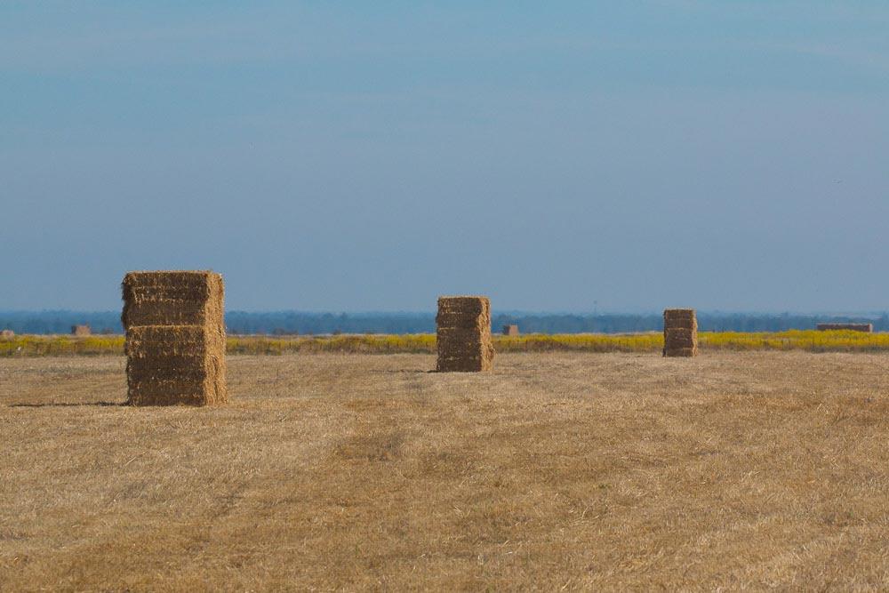 Montones de balas de paja en un campo de cereal cosechado
