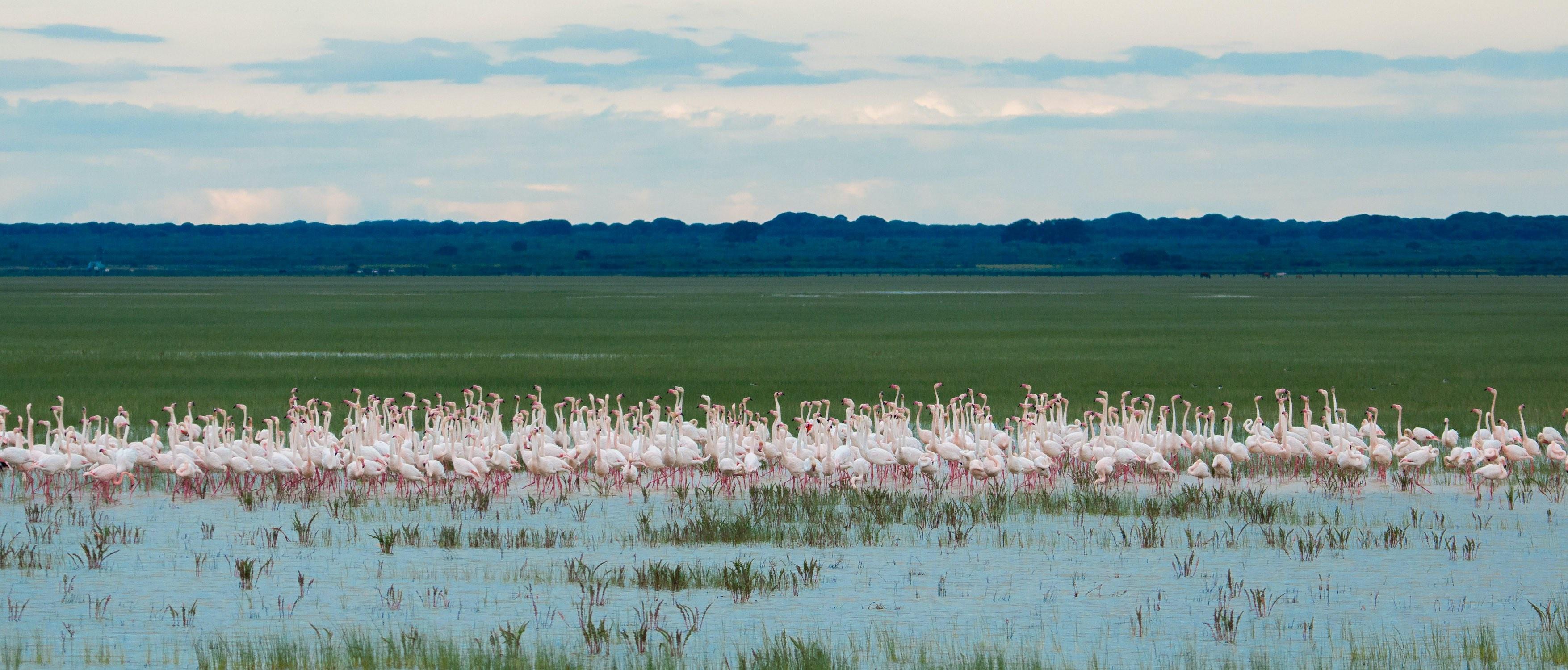flamingo-flock-marshes