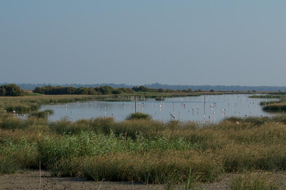 cano-guadiamar-verano