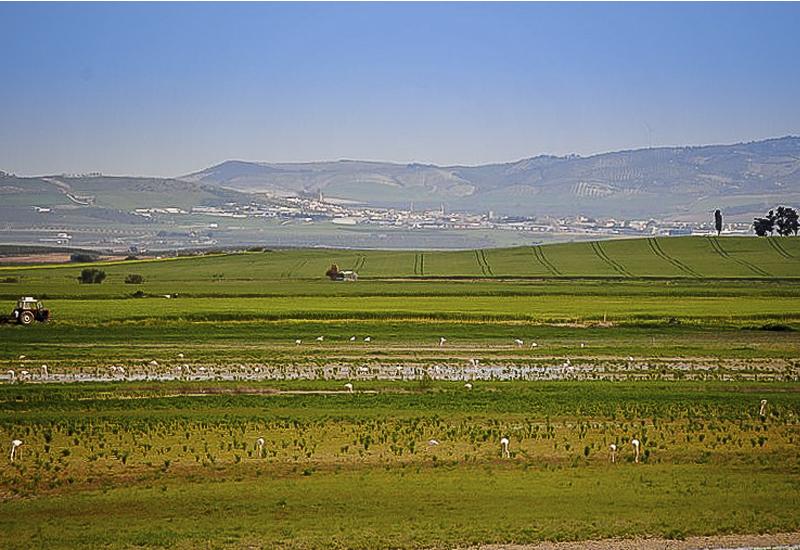 Sevilla steppes
