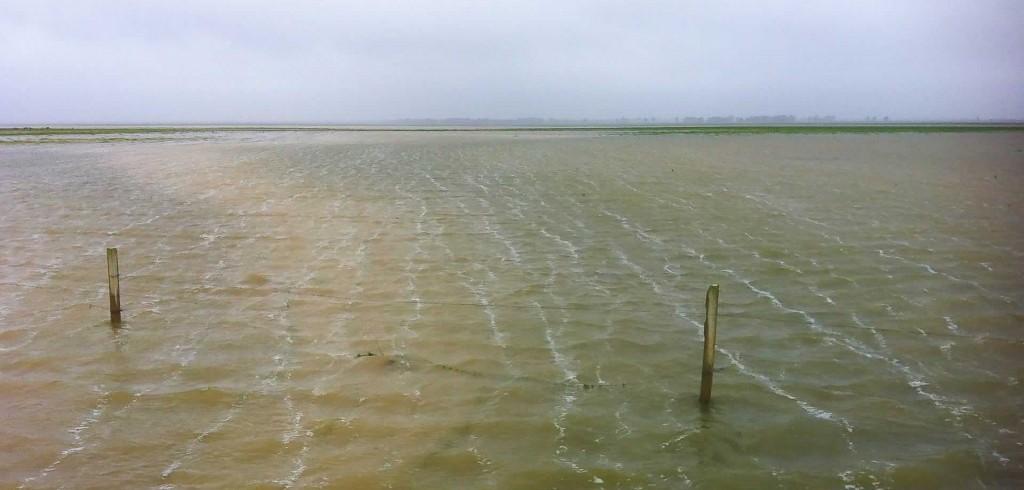 Marismas inundadas