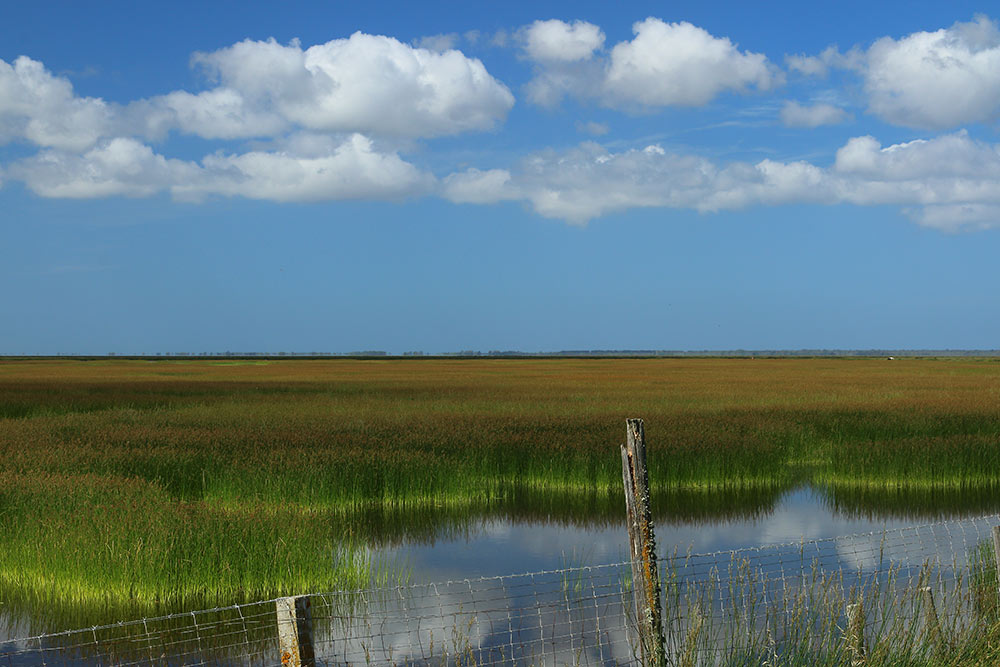 Water under reeds in the marshes in spring