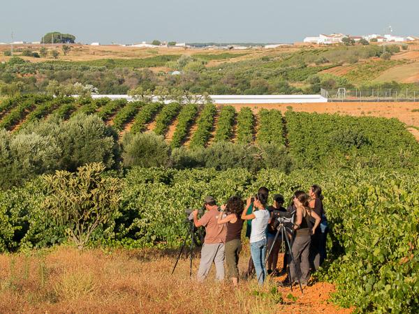 Birdwatchers in the vineyards