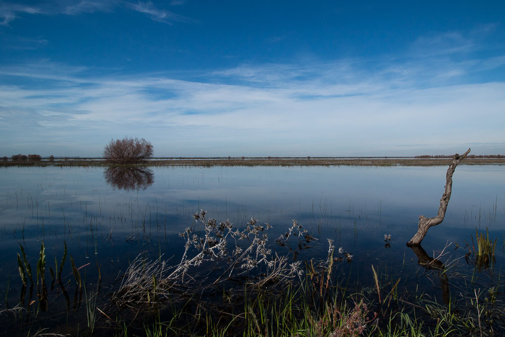 Reflections over the flooded marshes
