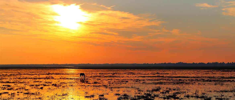 donana-marshes-winter-sunset1