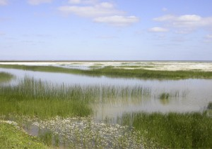 Marshes in spring