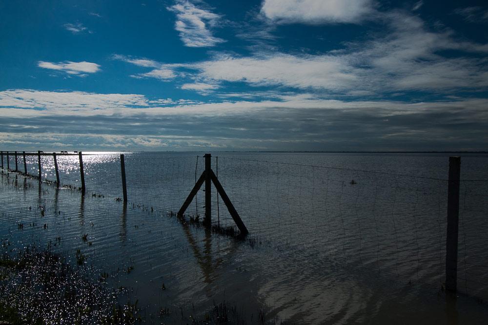 Flooded marshes against the light