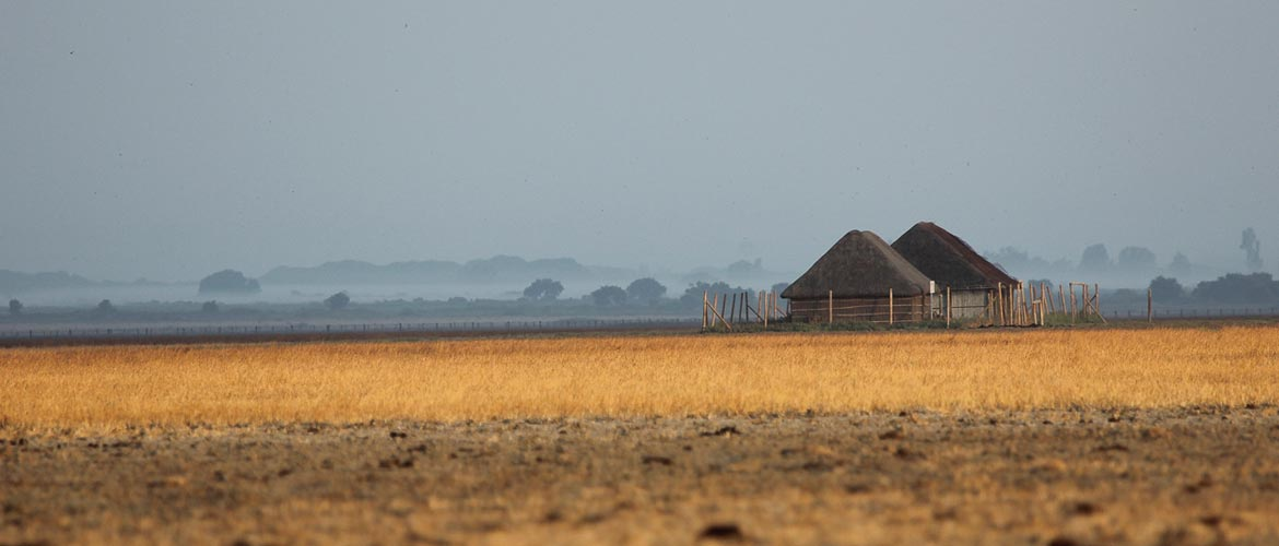 marshes-summer-thatch-donana1