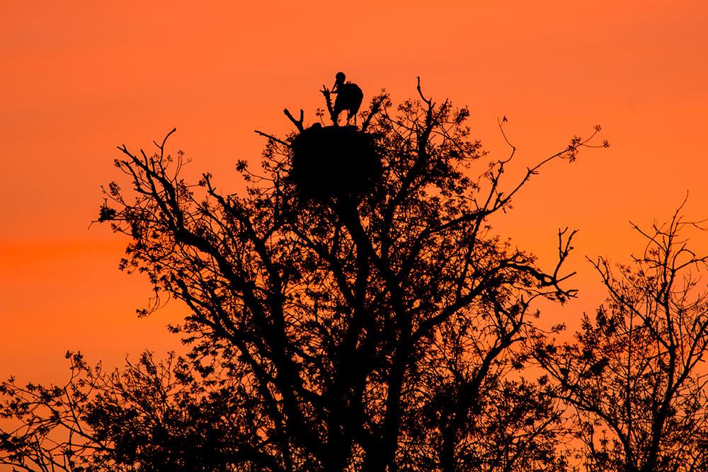 stork nest at sunset