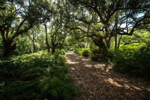 Bosque de alcornoques y helechos