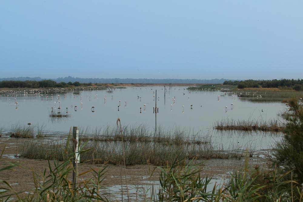 Caño Guadiamar in summer