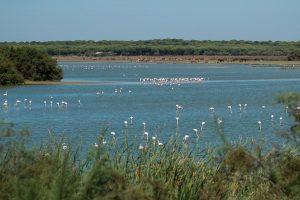 Flamingos at Dehesa de Abajo