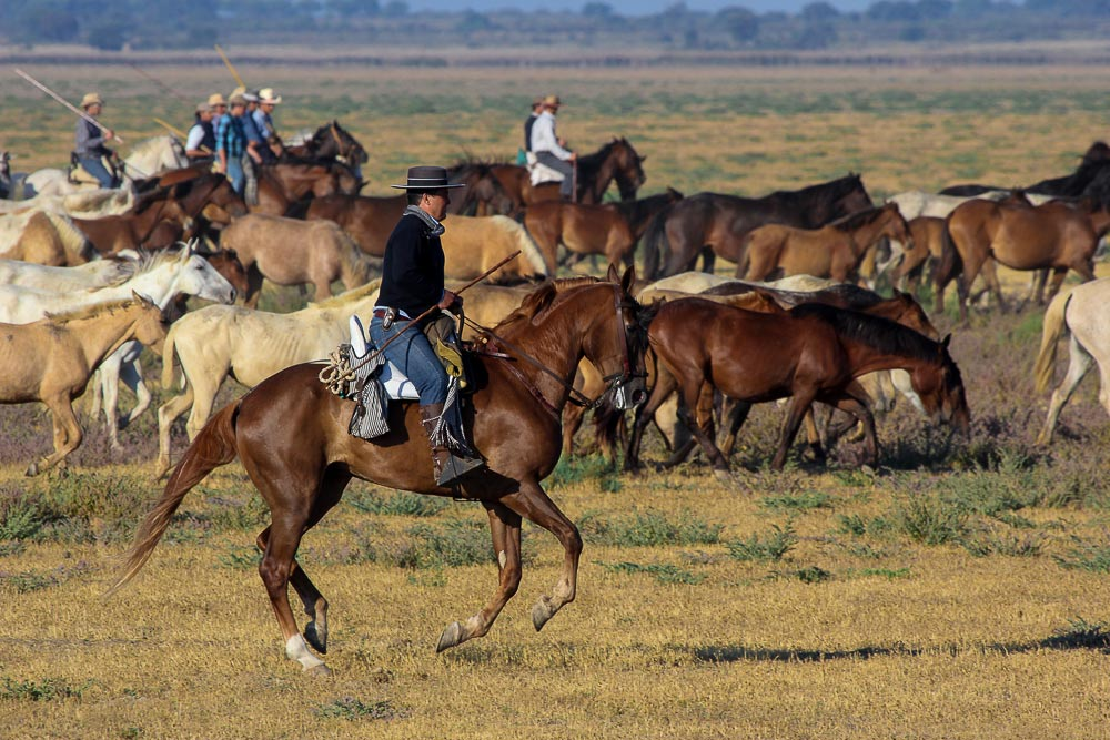 Group of mares being driven by cattle keepers