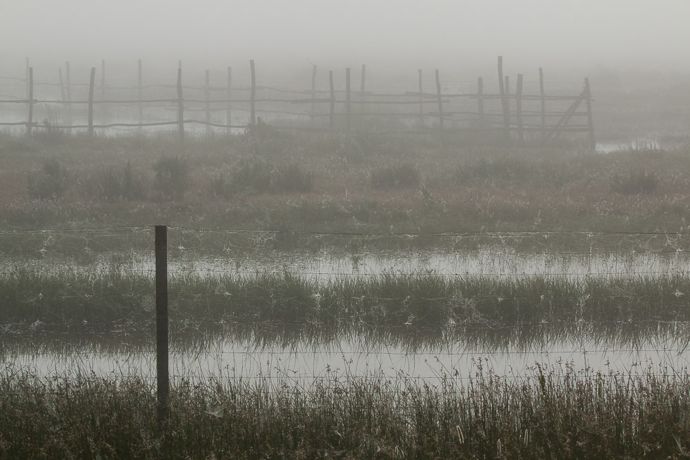 Misty day in the marshes