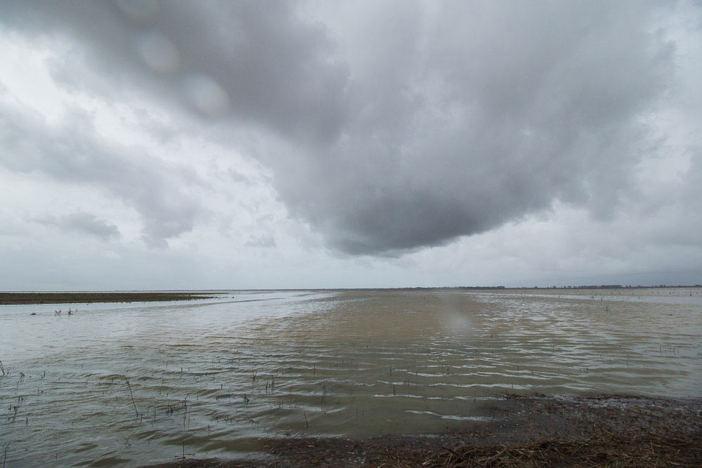 Dark clouds over the flooded marshes