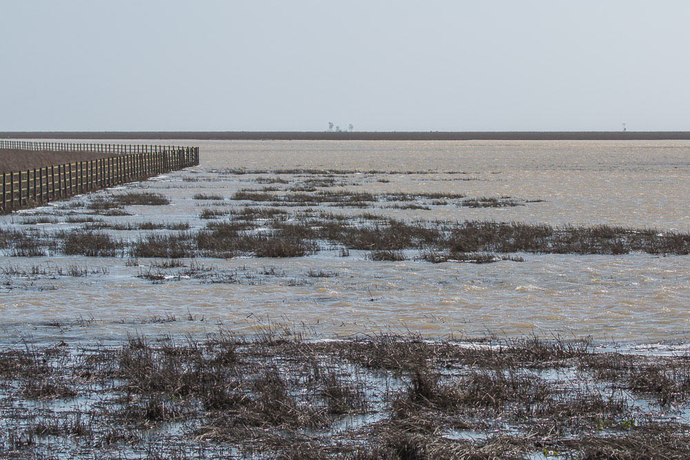 Flooded marshes
