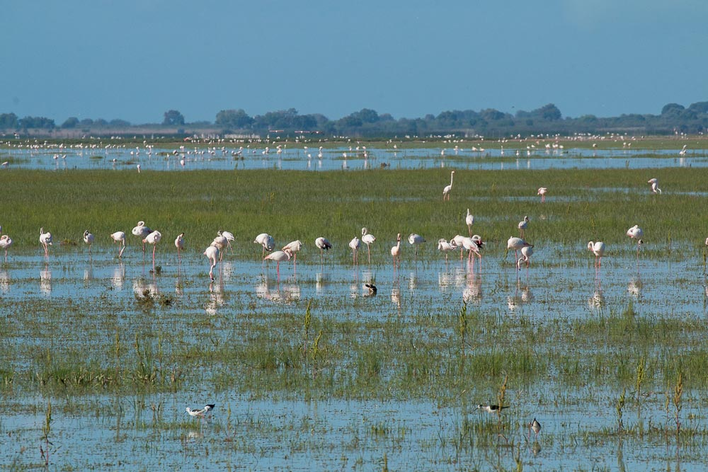 Flooded marshes and flamingos