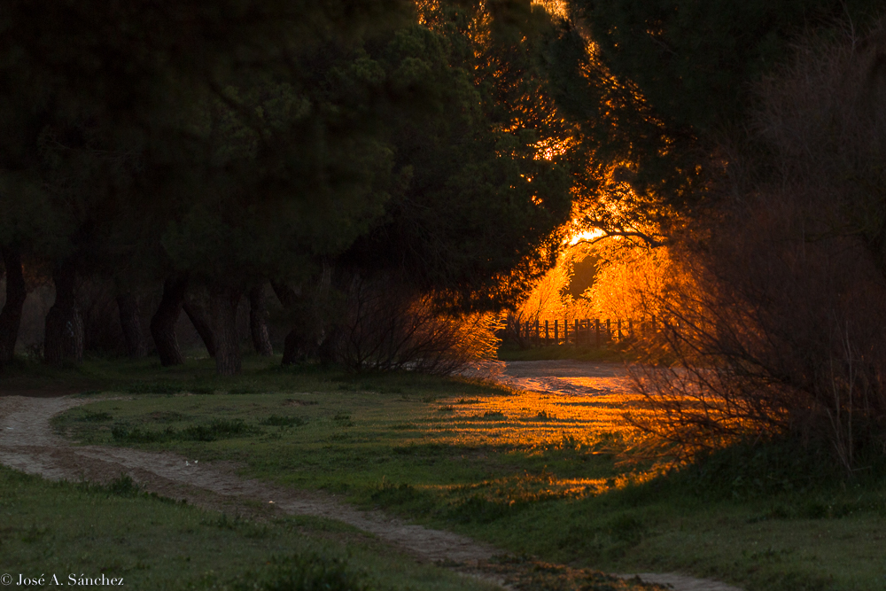 Sunrise in the forest with a fence