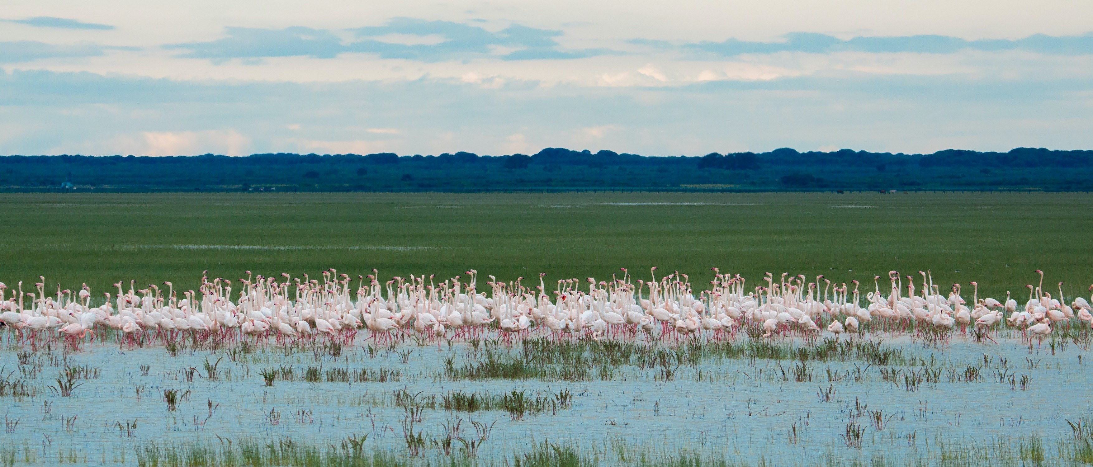 flamingo-flock-marshes