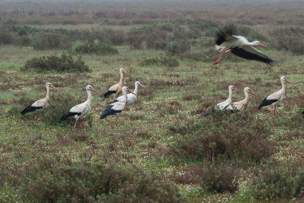 A group of storks taking off