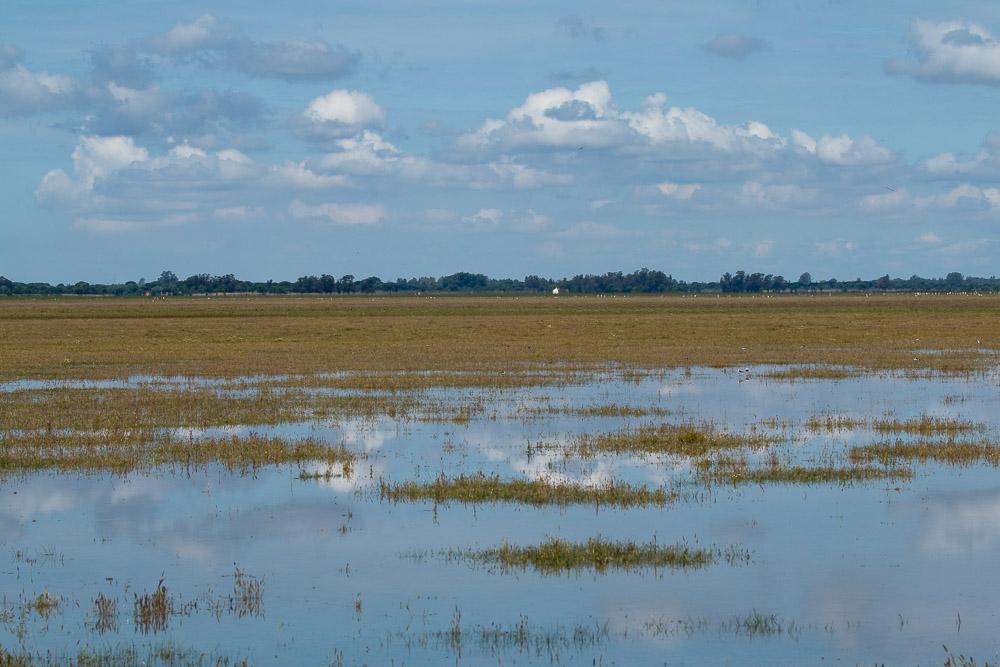 Puddled marsh