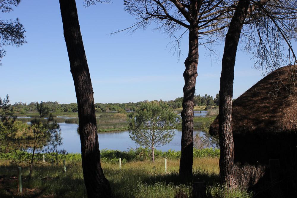 Arroyo de La Rocina y observatorio de aves