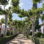 Calle con villas en el Cortijo de los Mimbrales