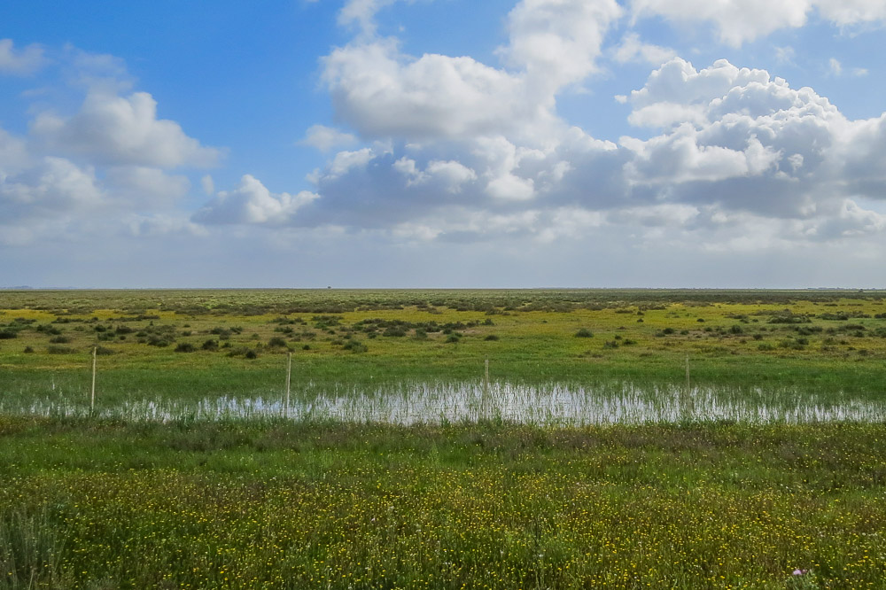 Marsh landscape with clouds on a blue sky and water puddle