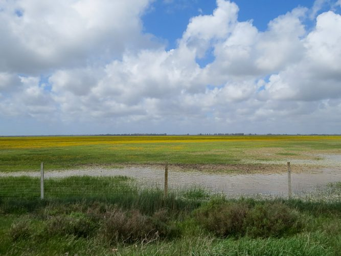 Marsh landscape with a fence and yellow flowers in the background