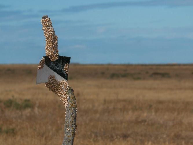 Agrupación de caracoles sobre un poste viejo de una valla con una señal de coto de caza