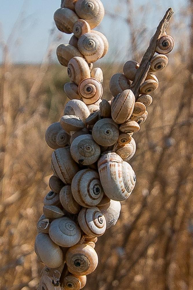 Snail cluster on a plant sem